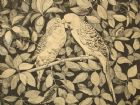 Budgerigar original woodcut engraving 1975